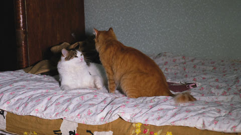 Two funny cats play with each other on the bed, 4k Live Action