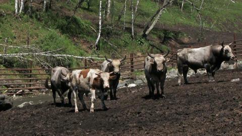 Livestock Farm ビデオ