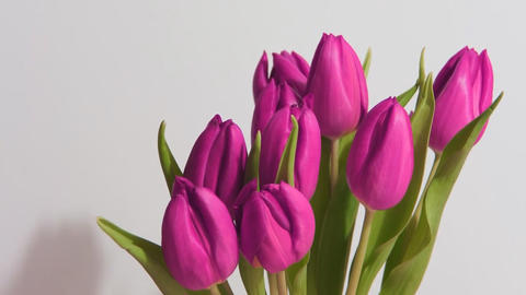bouquet of tulips on the move Footage