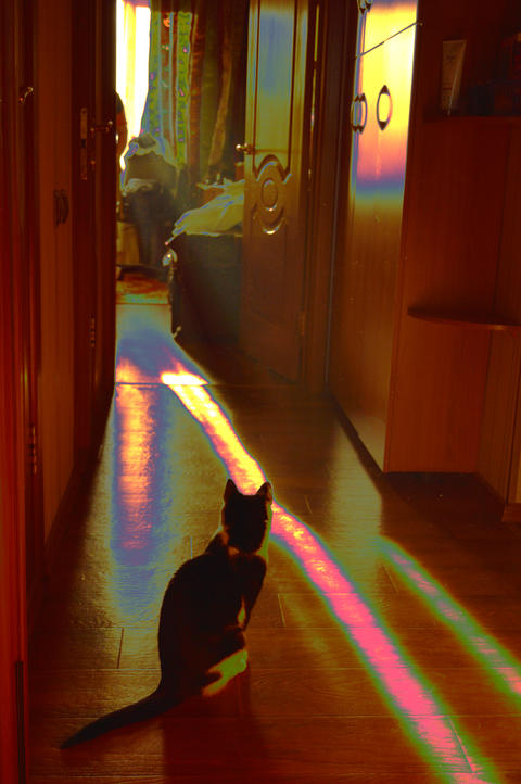 black cat sitting in morning light, fantasy photo processing, rainbow pattern フォト