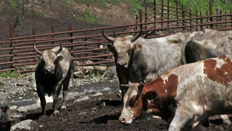Livestock Farm Footage