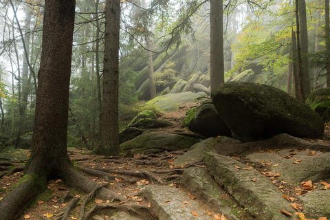 Huge rocks in the forest フォト