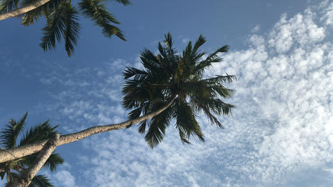 Palm Trees And Blue Sky Footage