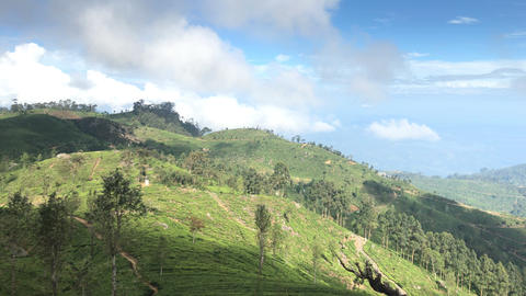 Panorama View Of Tea Plantation In Sri Lanka Footage