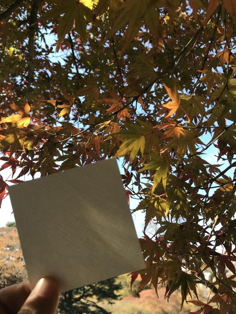 man holds blank white paper with beautiful yellow and orange maple leaves Foto