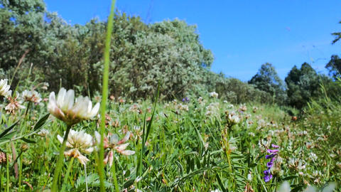 Blooming forb meadow Live Action