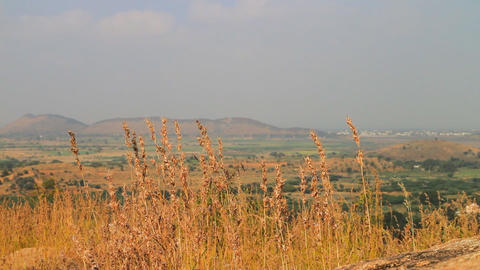 Wild grasses on plateau of Central India Live Action