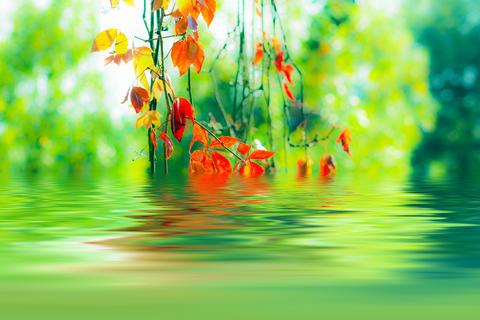 Golden autumn leaves and aqua sky フォト