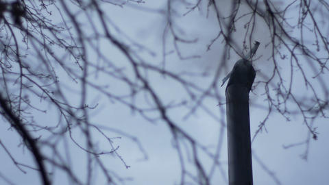 Smoldering Chimney on Desolate Sky Live Action
