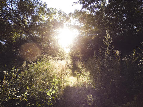 The sun shines through the leaves of the trees and grass フォト
