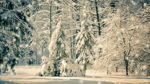 Fantastic Fairytale Magical Landscape View Christmas Tree Footage