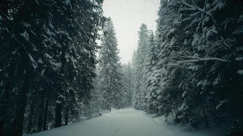 Winter forest road in falling snow Foto