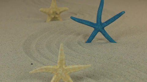 Approaching the three starfish standing on the sand zigzag. Dolly shot Live Action