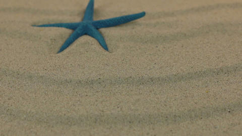 Approximation the blue starfish lying on the sand dunes. Dolly shot Live Action