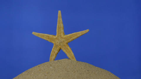 Rotation, light yellow, beautiful starfish on sand. Isolated Footage