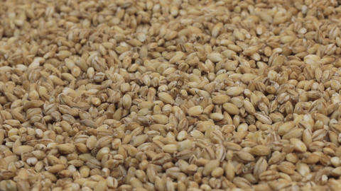 Rotation of the background of whole grains of pearl barley. Close-up Footage