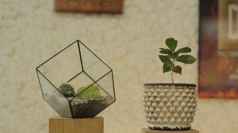 Pot with Flower and Glass Cube Footage