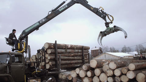 Lorry claw loader unloads wood logs from heavy truck at sawmill facility Live Action