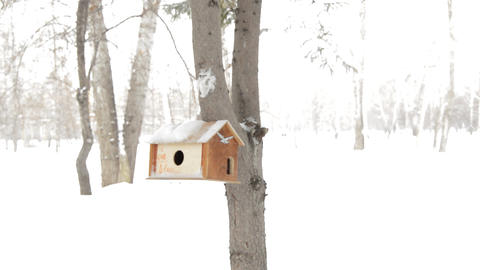 Wooden birdhouse on the trunk of a fir tree, care for... Stock Video Footage