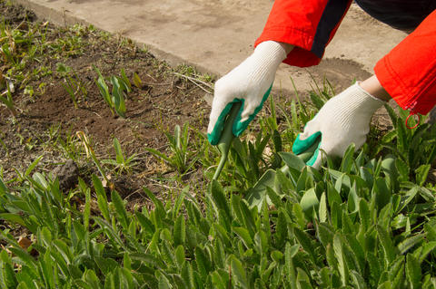 Woman wearing gardening gloves holding a rake and shovel, caring for plants フォト