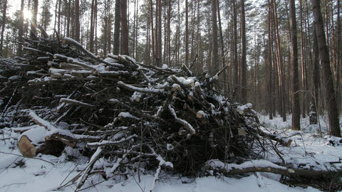 Cut logs and branches from a tree trunk lying in the forest partially covered in Footage