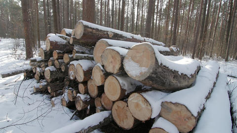 Wooden Logs Covered With Snow on the Ground in the Forest Bild