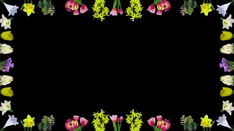 Frame of opening various Easter time flowers in RGB + ALPHA matte format Footage