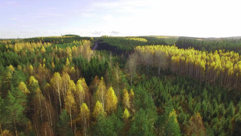 Gravel road in autumn forest landscape, aerial shot Footage