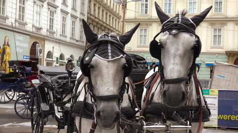 Two horses, a team at St. Stephen's Cathedral. Vienna, Austria. 4K Footage