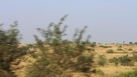 Typical view of southern winter yellow savanna Live Action