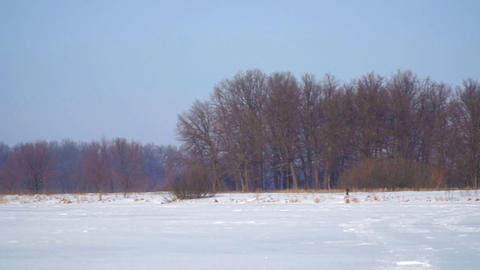 Snow-covered field, forest and a blue sky Footage