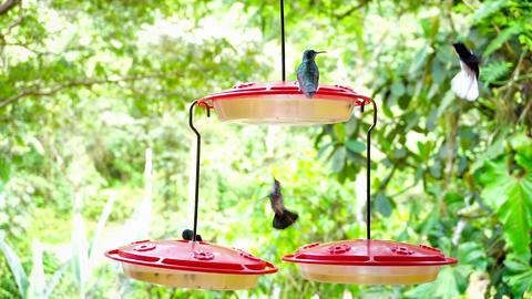 Slow Motion Hummingbirds Footage