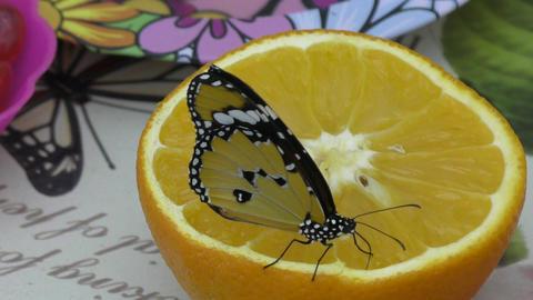 Butterfly have breakfast orange juice Footage
