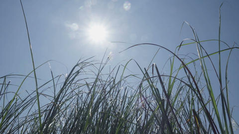 Sun Peaking Through The Tall Grass Footage