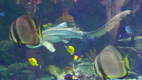 Aquarium, Fish Tank, Coral Reef, Animals, Nature Footage