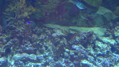 Aquarium, Fish Tank, Coral Reef, Animals, Nature 영상물