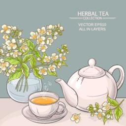 jasmine tea vector illustration Vector