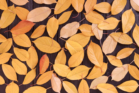 Background with autumn leaves on black wooden table Photo