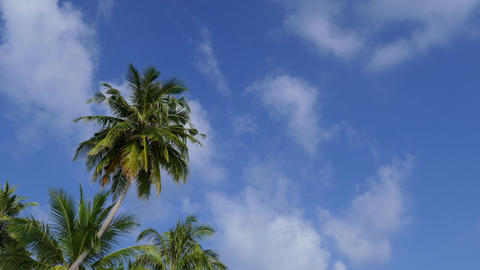 Palm Trees Tropical Sky And Clouds With Copy Space Footage