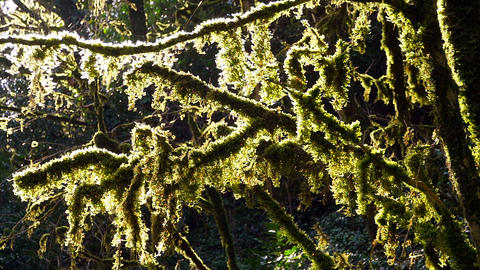 Trees overgrown with moss in a Sunny day Footage