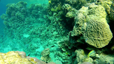 The corals and fish. Tropical Footage