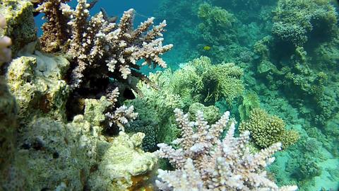 Snorkeling, Warm tropical sea Footage