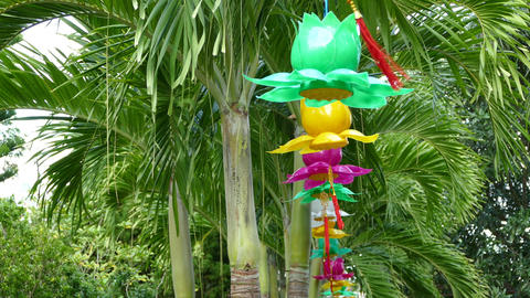 Lanterns at the palmtrees Footage