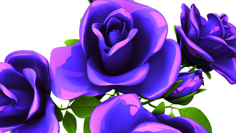 Blue Roses Bouquet On White Background CG動画