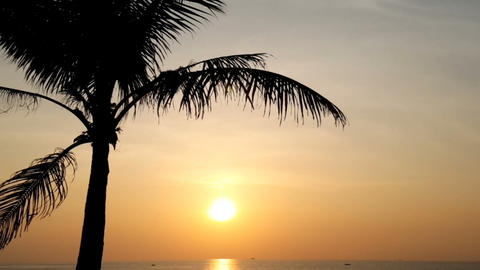 Palm tree in the evening sunset on the sea 画像