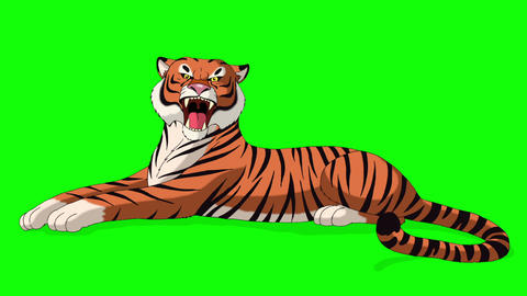 Big Tiger Lies and Growls Chroma Key Animation