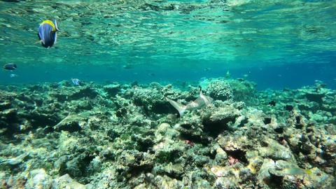 Marine Life Fish Shark Swimming On Coral Reef Sea Ocean Footage
