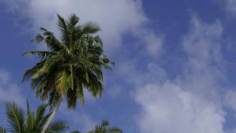 Sky Clouds And Palm Trees Time Lapse For Holidays Vacations Footage