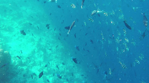 Fishes and Colorful Corals at the Beautiful of Maldives Footage