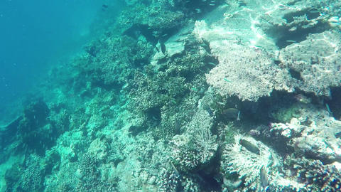 GOPR0707 Diver A2Underwater Colorful Fishes and Corals at the Beautiful Tropical Footage